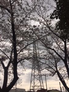 H29.4.6花見あいにくの曇り空